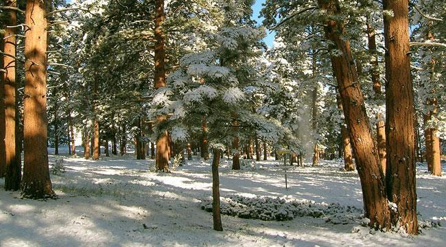 Снеговик из мастиПланировка дачного участка 6 соток