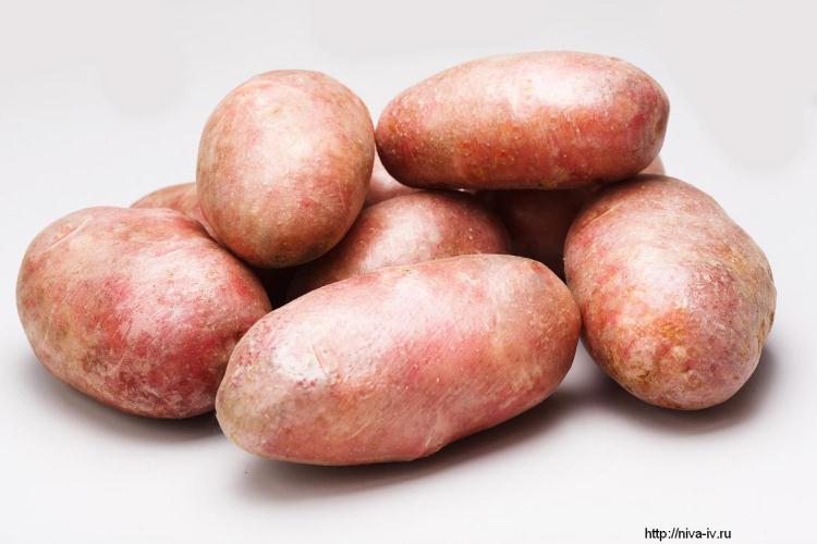 Картинки по запросу статьи о семенной картофель