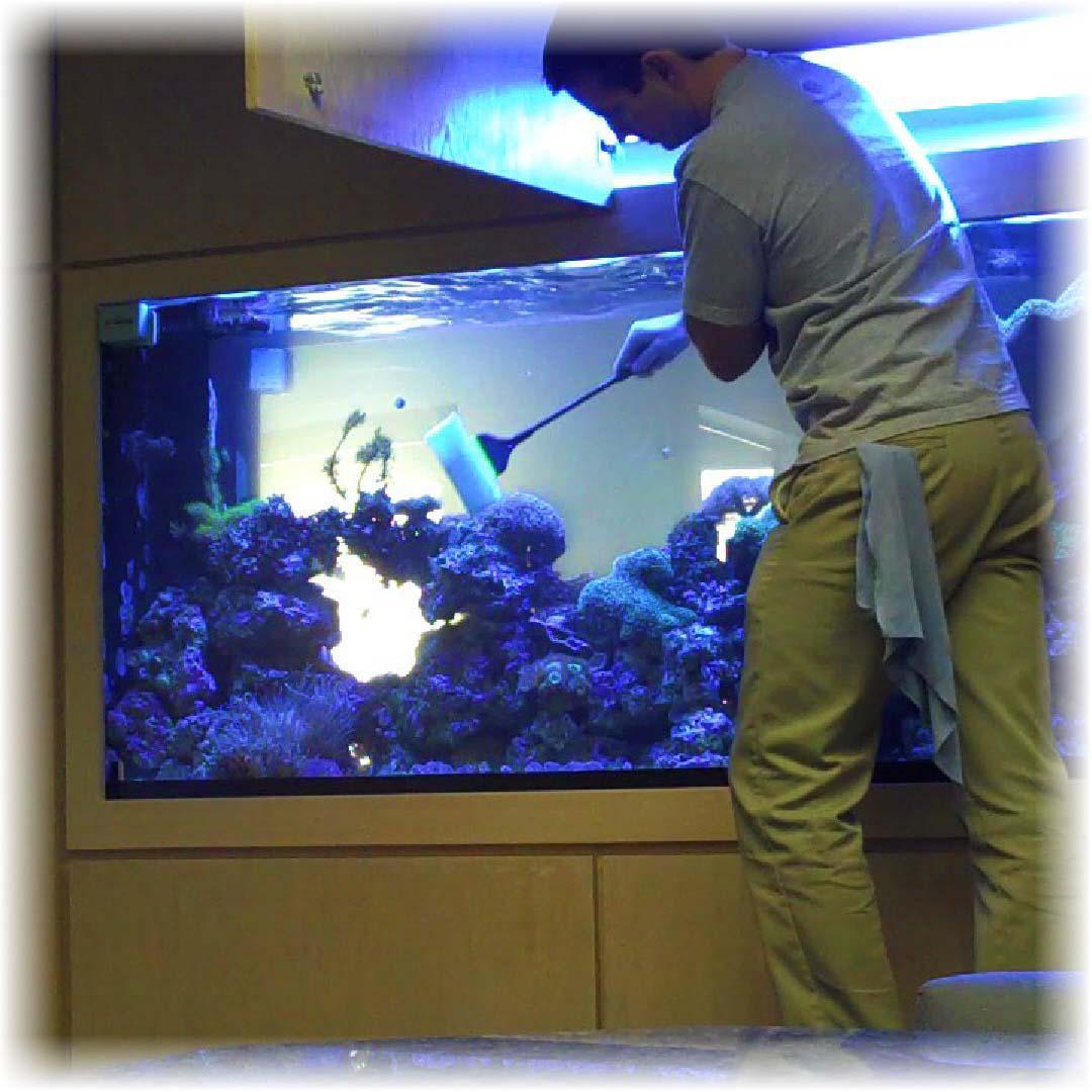 Продажа аквариумов и оформление аквариумов под ключ( крышка,тумбочка,оборудование,о формление) Также в продаже есть...